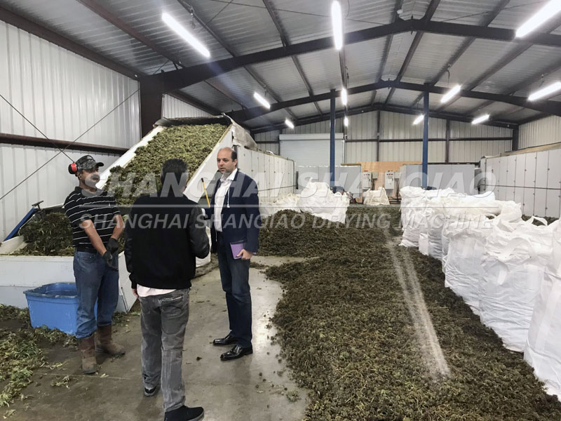 Hemp Drying Machine Successful Working Site