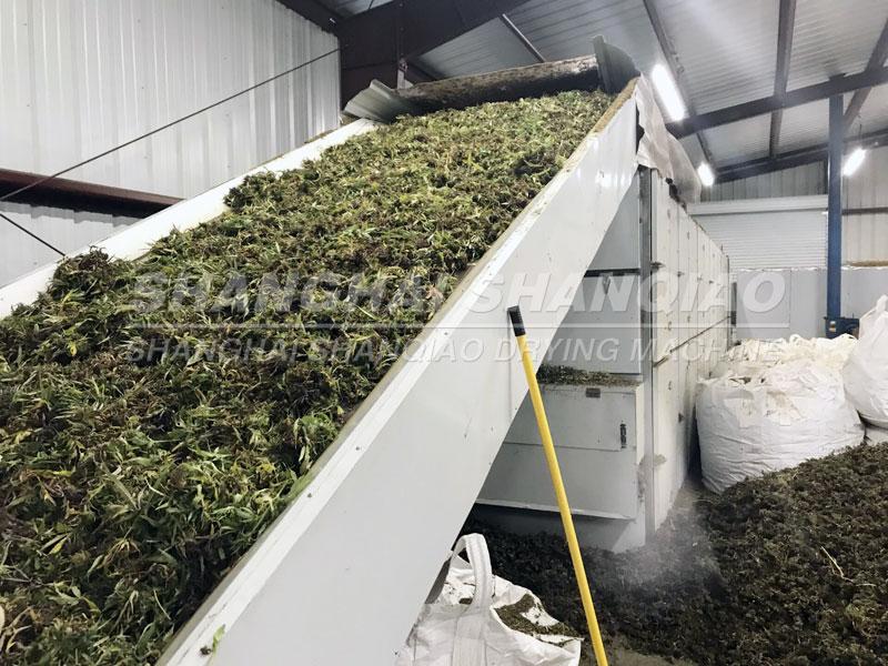 Hemp drying machine in USA